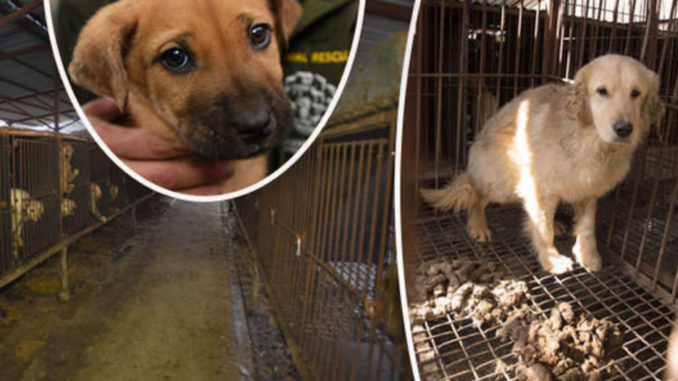 Dog meat UK: Eating animals could be banned in Britain