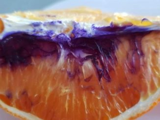 The mystery of the purple orange solved in Brisbane