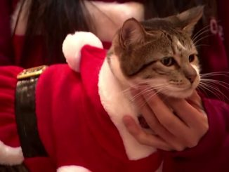 Santa cats spread Christmas cheer in Seoul - Yahoo Singapore News