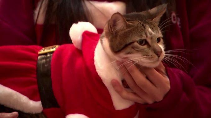 Santa cats spread Christmas cheer in Seoul - Yahoo Singapore News